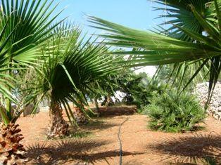 Garden Location House 45348 Pescoluse