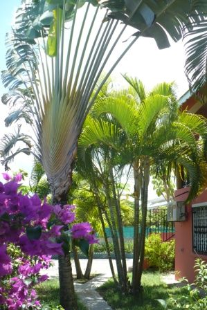 Garden Location Self-catering property 71841 Sainte Anne (Guadeloupe)