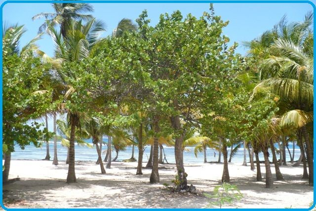 Beach Location Self-catering property 71841 Sainte Anne (Guadeloupe)