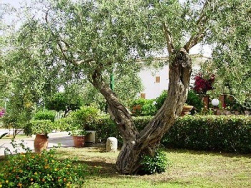 Garden Location Apartment 102041 Gioiosa Marea