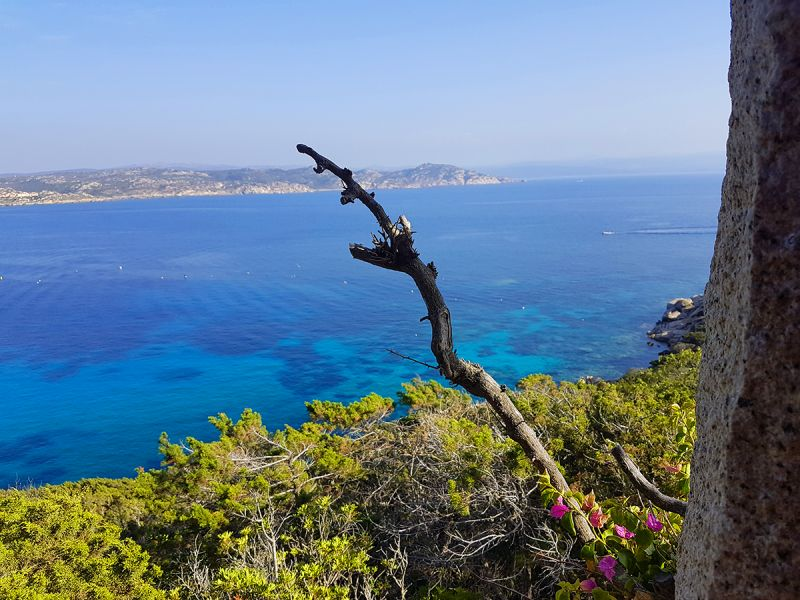 View from terrace Location Villa 90063 Santa Teresa di Gallura