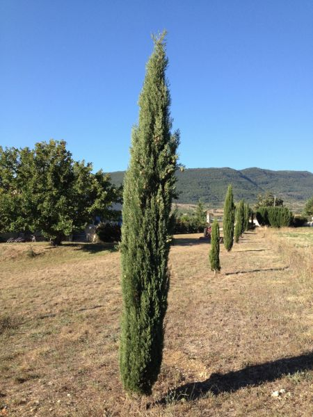 Garden Location Self-catering property 12573 Nyons