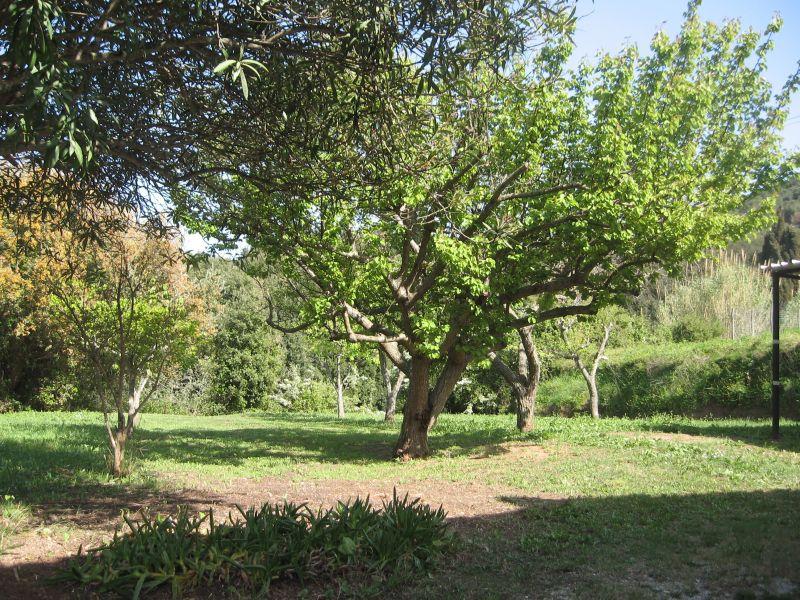 Garden Location Apartment 39147 Capoliveri