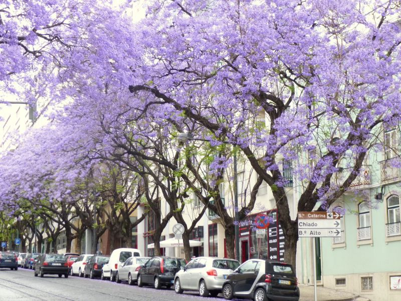 Surroundings Location Apartment 106237 Lisbon