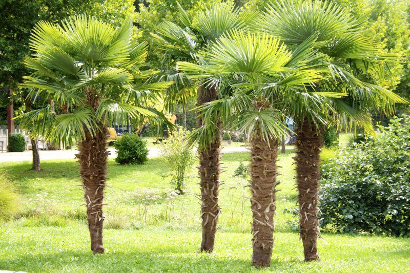 Location Villa 100400 Sarlat