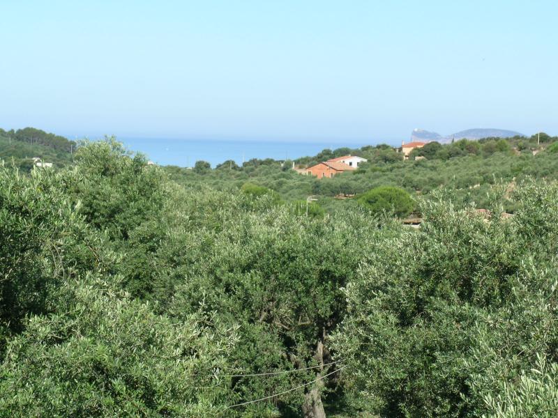 Outside view Location Villa 65699 Alghero