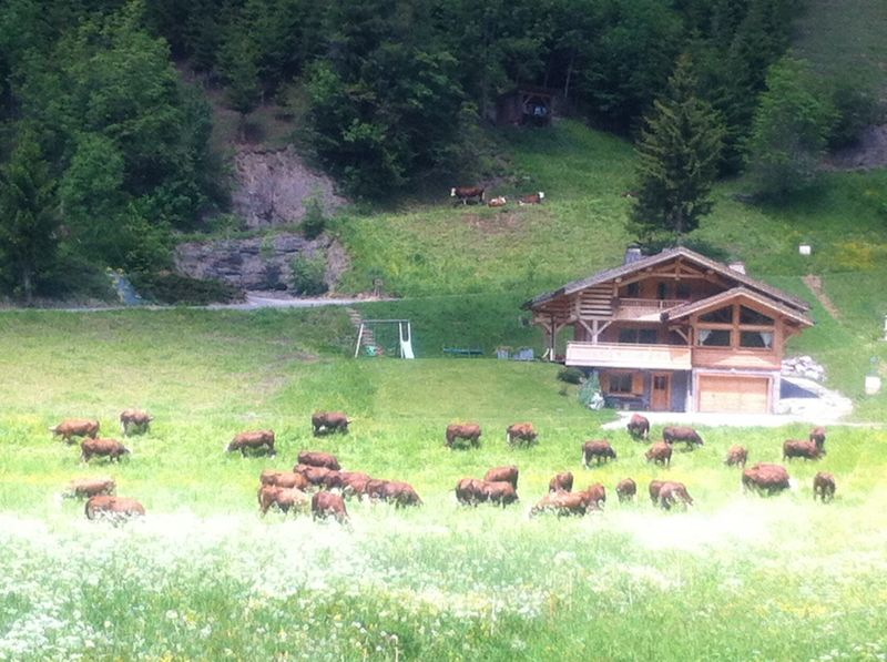 View from the property Location Chalet 66538 Le Grand Bornand