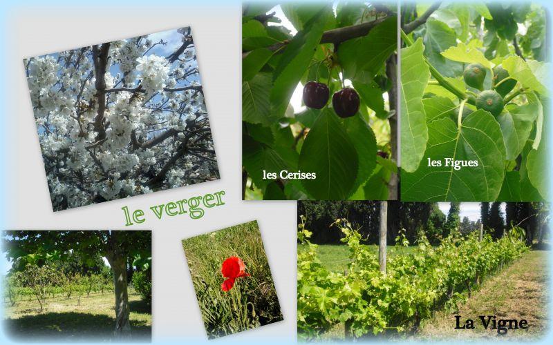 Garden Location House 100030 Avignon