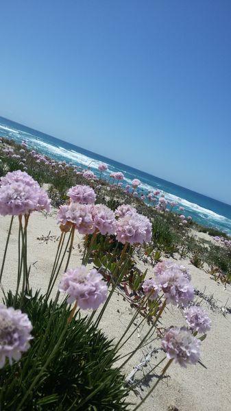 Beach Location Apartment 99274 Badesi