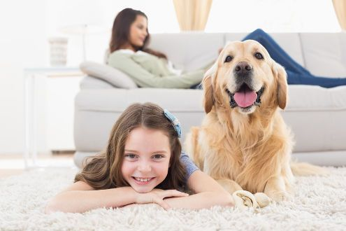 6195 pet-friendly rentals